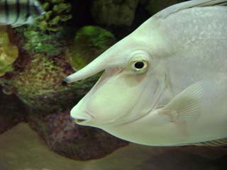wierdfish